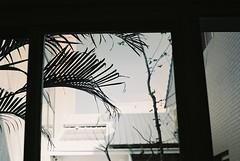Take it easy (Moon Tramp) Tags: plants tree film window analog 35mm vintage 50mm nikon fuji superia vintagecamera fujifilm easy filmcamera pentacon f18 chill oldcamera superia200 filmphotography nikonfm colorfilm