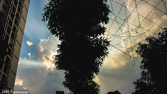 Bu tri v ci cy gia mn hnh (Hong Nam L) Tags: city blue sky sunshine times tri nng