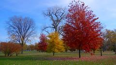 Washington Park. Chicago, USA (Klecius Palma) Tags: park parque autumn trees chicago fall fallfoliage rvores washingtonpark autumncolor