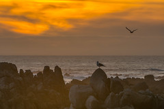 Sunset, Point Pinos (angus molyneux) Tags: california sunset coast monterey pointpinos