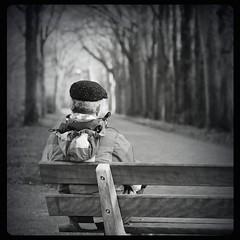 Looking out (andzwe) Tags: reza bank bench ruis grainy blackandwhite man looking back lane perspective trees cap grey hair gray panasonicdmcgh4 copyright ©andzwe andzwe panasoniclumixdmcgh4