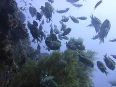 P1000696 (JustinField-Greens) Tags: marinepark lordhoweisland ballspyramid mtgower