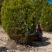 Trees_of_Loop_360_2014_066