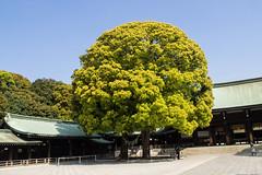 Meiji shinto heiligdom (Rita Willaert) Tags: japan sanctuary tokyojapan tokio meijishrine chiyoda heiligdom