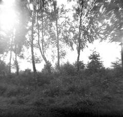 2014 LO-FI Landscapes (DIANA BABY) (yerzmyey) Tags: baby white black film nature photography village 110 lofi meadow diana orca 16mm microfilm yerzmyey