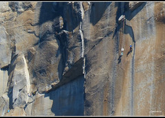 Climbers on Half Dome -Yosemite National Park (Contrails) Tags: california trees usa mountains nature sunshine landscape nationalpark nps bluesky sierra climbing yosemite wilderness climber elcapitan sierranevada climbers yosemitevalley elcap rockformation granitemonolith rangeoflight