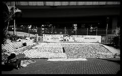 IMG_20141122_145840 (cstam) Tags: sunnyday taikoktsui oldskin