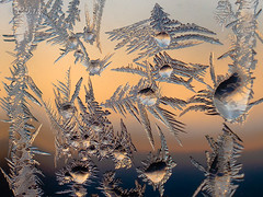 Frost # 45 (claudiaulrikegoodall) Tags: