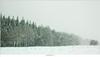 Sneeuwbui op de Stippelberg (NH020503) (nandOOnline) Tags: winter bomen sneeuw nederland natuur boom landschap sneeuwvlokken rips sneeuwbui nbrabant stippelberg