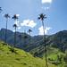 E as palmeiras mais altas do mundo