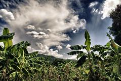 Iringa Jungle (Tanzania) (guailon79) Tags: africa trip travel cloud color colour miguel rural tanzania fisheye jungle nubes miguelangel gomez ong ngo restless 2014 jungla iringa samyang ruralphoto miguelangelgomez miguelangelgomezrando ruralphotobygomez restlessdevelopment