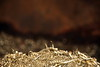 "Litt gull - - ""Gold"" (erlingsi) Tags: abstract metal oc nor metall volda shavings sunnmøre spon noreg scana späne erlingsivertsen metalshavings copeaux artlegacy dreiespon"