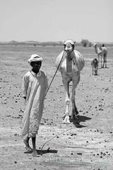Herdsmen of the Bayuda - my camel and I (10b travelling) Tags: africa portrait people bw sahara monochrome blackwhite desert sudan nile camel nomad nubia beja bedouin nubian 2013 pastoralist bayuda carstentenbrink bisharin iptcbasic cmtbbw
