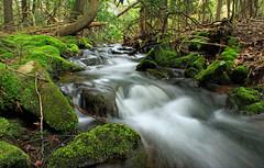 Hypsy Creek (1) (Nicholas_T) Tags: trees nature creek forest waterfall moss spring rocks stream hiking pennsylvania falls cascades creativecommons poconos ravine monroecounty stategamelands38 stategameland38 sgl38 hypsycreek hypsygap