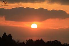 (elisa brambilla) Tags: savannah savana park sun tramonto sole orange arancio