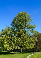 Baum (jan.boettcher) Tags: park tree spring baum frhling