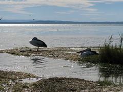 Tuggerah Lakes
