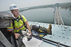 Throgs Neck Bridge Falcons (MTAPhotos) Tags: falcons verrazanonarrowsbridge verrazanonarrows throgsneckbridge peregrinefalcons marineparkwaygilhodgesmemorialbridge marineparkwaybridge bridgesandtunnels
