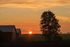 Golden Hour (Infomastern) Tags: morning sky cloud sun mist sol fog rural sunrise landscape countryside himmel goldenhour soluppgng morgon landskap dimma moln sdersltt landsbygd simlinge gyllenetimmen