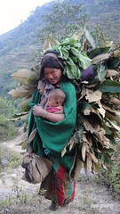 An indigenous woman carrying fodder with her baby! (amit ghising) Tags: motherhood mother ethnicity indigenous life rurallife hill siraichuli mahabharat chitwan kaule chepang struggle child momwithchild portrait exclusion lowproductivity poverty kid unge  moderskap mutterschaft
