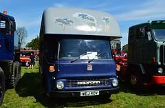 Bedford TK 860 (PD3.) Tags: uk england horse festival truck bedford box transport hampshire lorry dorset trucks basingstoke tk lorries hants horsebox 860 40v wej thorneycroft wej40v