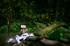Danbo fly with firefly (Andy-Hsieh) Tags: light green night zeiss 50mm fly sony carl za firefly a7 ssm planar danbo  a7ii   a72 a7m2  ilce7m2