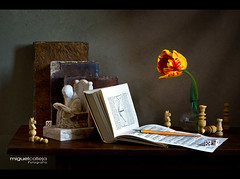 BODEGN CON LIBROS Y PIEZAS DE AJEDREZ (Miguel Calleja) Tags: stilllife chess books bodegn tulip libros ajedrez checs tulipe naturemorte naturamorta libres tulipn