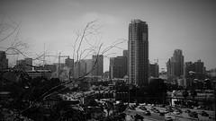 San Diego (Rand Luv'n Life) Tags: blackandwhite monochrome skyline outdoors san downtown diego freeway tall odc