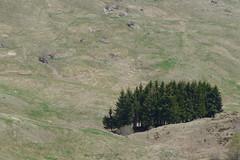 solitari (Tabboz) Tags: panorama primavera erba montagna strade cima prati vetta pascoli prealpi fioriture