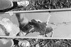 I Crack Me Up (Georgie_grrl) Tags: friends blackandwhite toronto ontario reflection feet me broken mirror photographers social sneakers converse pentaxk1000 parkdale cracked outing selfie icrackmeup ilford400asa rikenon12828mm torontophotowalks topwpkdl