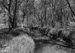 Path Along the Stream (ddurham000) Tags: