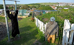 Rottingdean scarecrows (melita_dennett) Tags: england downs sussex countryside weird creepy odd allotment scarecrows rottingdean