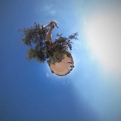 Goat in tree miniworld (PaulHoo) Tags: marocco maroc 360degree tiny planet air sky clouds sun summer 2016 circular world miniworld globe goat animal