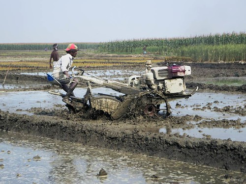 Rice Paddy Tractor