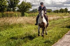 Bridleway (77 GR) Tags: england horse action unitedkingdom gb draycott gallop canon24105mm canon7dmarkii