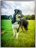 Lisca (8 mois) (K r y s) Tags: nature outdoor posing extérieur patrol alert lisca basenautique