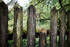 knocked out (.martinjakab) Tags: wood fence moss fujifilm zaun parallel holz moos classicchrome x100t