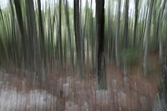 Bosco in movimento (Giuseppe Inglese) Tags: movimento astratto bosco laceno tamron1750mmf28diii bagnoliirpino canoneos70d giuseppeinglese