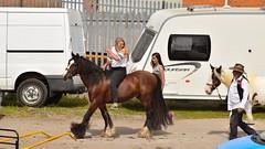 DSC_4519 (c9mpc) Tags: beauty bareback jockey woman girl blonde selling trading horsefair fair brigg shire horse romani travellers gypsy
