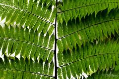 Tapanti (ingbalfaro) Tags: cartago tropic bosque tapanti orosi bosquehumedo