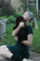 Snuggles (m.gifford) Tags: tibi whoodle puppy ourpuppy hazel