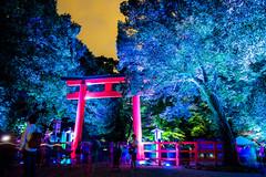when the night comes (Shimogamo shrine, Kyoto) (Marser) Tags: xt10 fuji raw lightroom japan kyoto shrine torii gate tree nightlight nightview