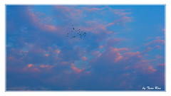 SHF_5110 (Tuan Ru) Tags: 1dmarkiii 14mm 100mm 135mm 1d 1dx 2016 2470mm 50mm 70200mm canon canon1d canoneos1dmarkiii canoneos1dx sky birds blue color tuanrau tuan ru