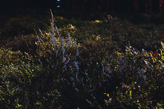 Germany (annajahn) Tags: sauerland woods flowers nature germany