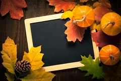 Festive autumn background. (nadiaborovenko) Tags: above agriculture autumn background celebration chalkboard colorful copy country decoration decorative fall falling farm festive flat flatlay food frame fresh garden halloween harvest holiday leaf nature november nuts october orange organic plant pumpkin rural rustic season seasonal space squash texture thanksgiving top vegetable view vintage wood wooden yellow