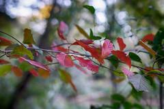 DSC05368-70_HDR (Capt Kodak) Tags: autumn chattahoocheerivernationalrecreationarea fall hdrefexpro2 madefrom3images medlockbridgepark nationalparkservice nikcollectionbygoogle niksoftware photomerge
