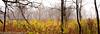 _MG_0898 (sbogden) Tags: nature treesinfog fallmorning foggyfallmorning treesinfall foggyscenery foggyfallscenery