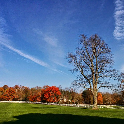 #Bridgeport #Connecticut #CT #NovemberSkies #FallColors