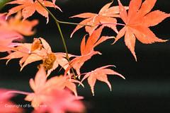 IMGP0103-1 (acornuser) Tags: uk autumn lake tree wet water rain dark pentax nation windy arboretum surrey trust org winkworth k3