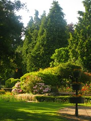 Memory of a Summer Evening (Dave Roberts3) Tags: flowers shadow tree gardens wales path lawn sunny shade fir hydrangea gwent abergavenny monmouthshire lindavista citrit